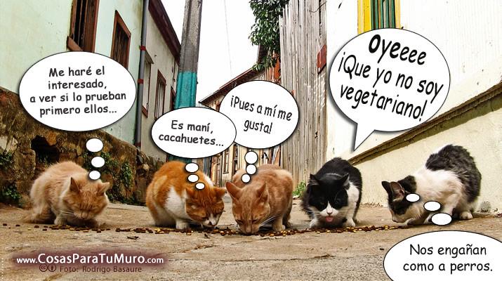 todo gatos.. - Página 3 Gatos_en_grupo-other