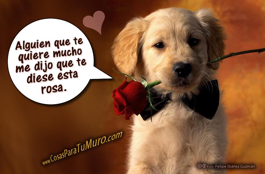 """===Un Rincón para """"Luna""""...=== - Página 2 Una_rosa_para_ti_2-other"""